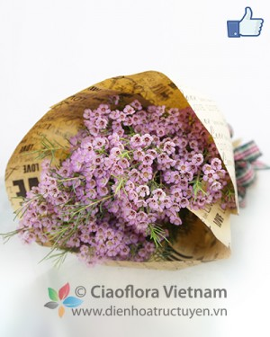 Bouquet of Waxflowers