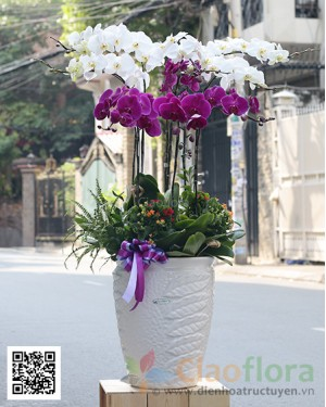 Luxury Pot of Orchids