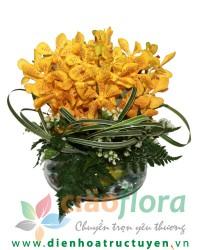 Elegant Mokara Orchid